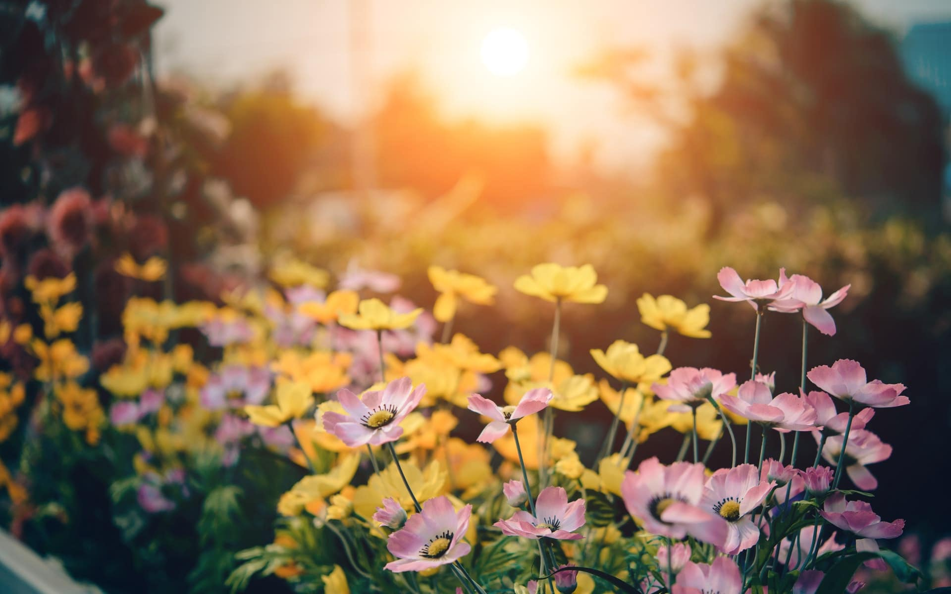 Why upcycling should be your next garden hobby
